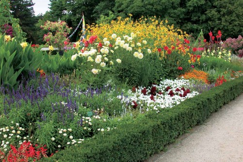 景观植物毯 手绘
